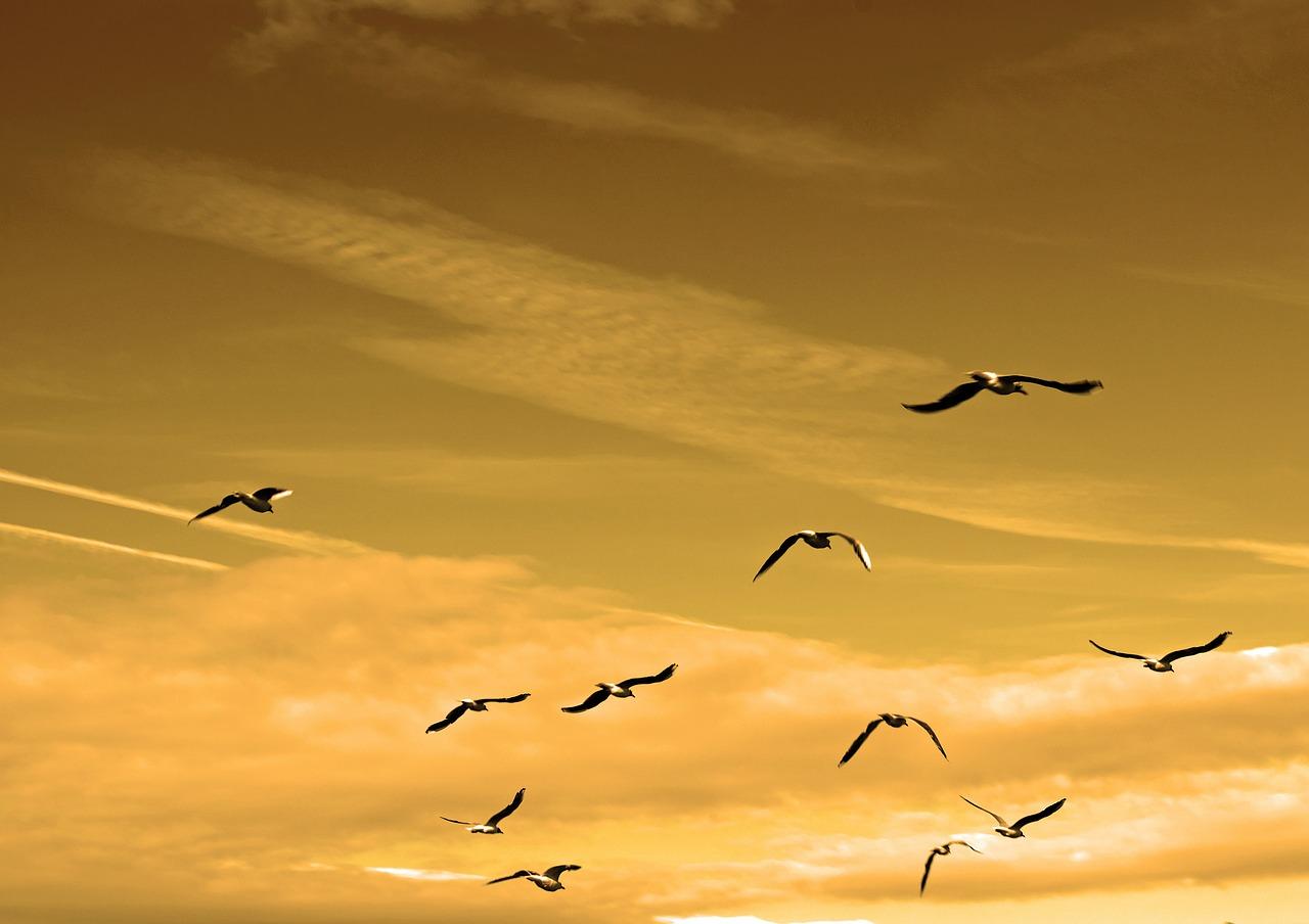 pajaros cielo amarillo