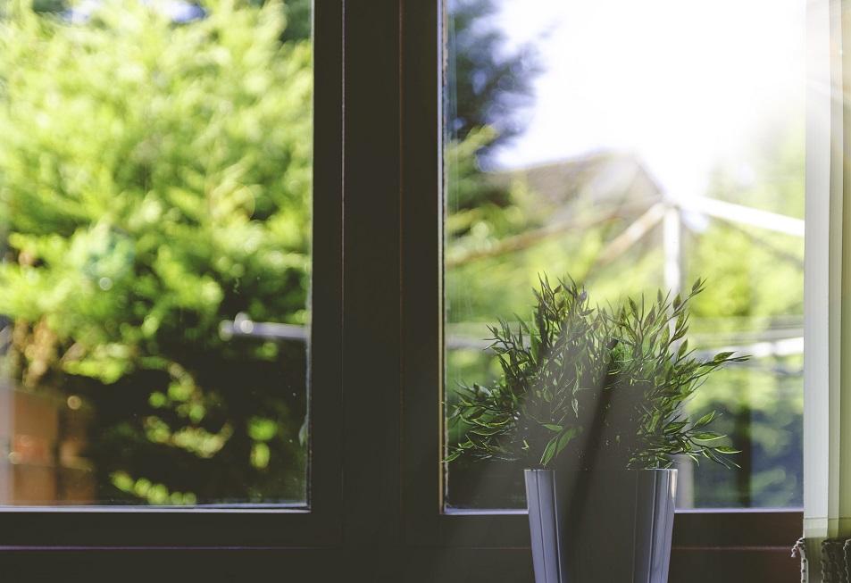 ventana luz sol plantas