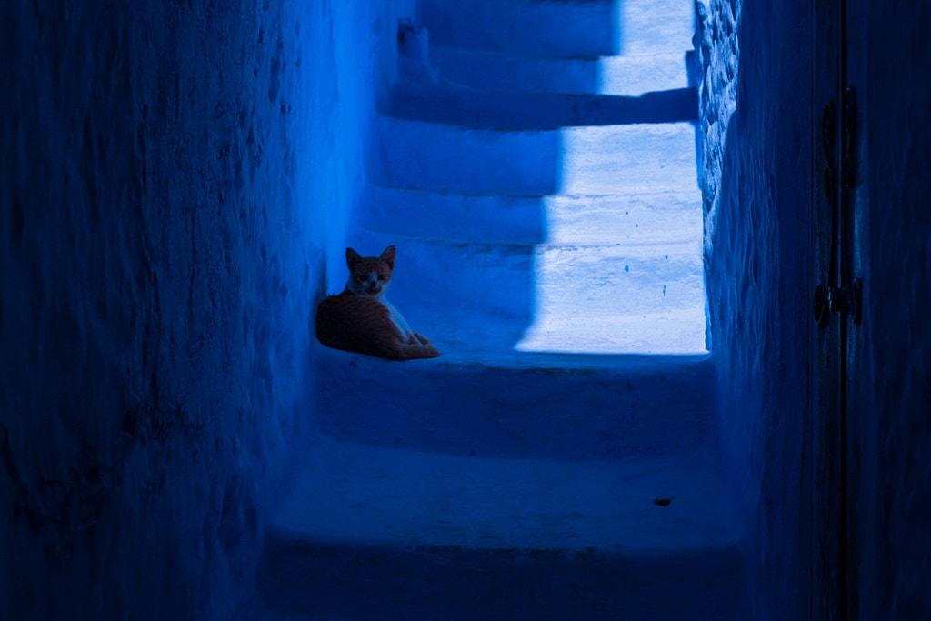 gato calles chefchoauen